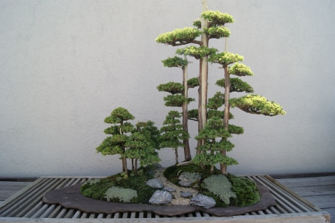 North American Pavilion Bonsai Part 2