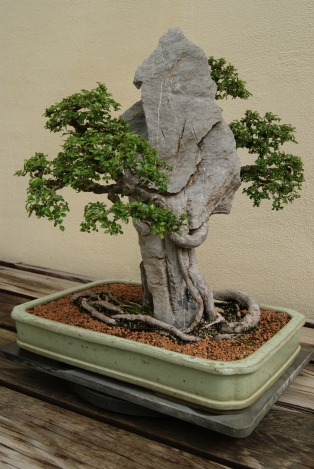 !Chinese Pavilion Penjing Part 3!