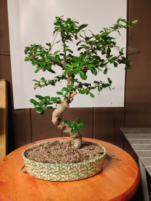 Wiring In Bonsai