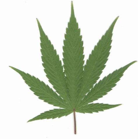 image from www.marijuanaseedbank.com
