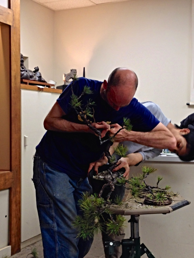 Peter Warren assisted by Minoru Akiyama Demo – Natures Way Bonsai 2014